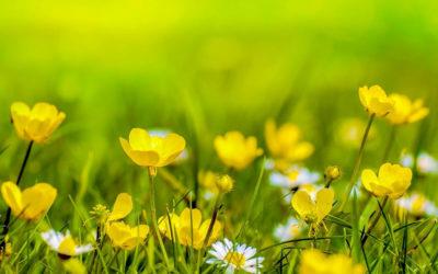Travaux de jardinage et 50% de réduction d'impôt : ce qu'il faut savoir