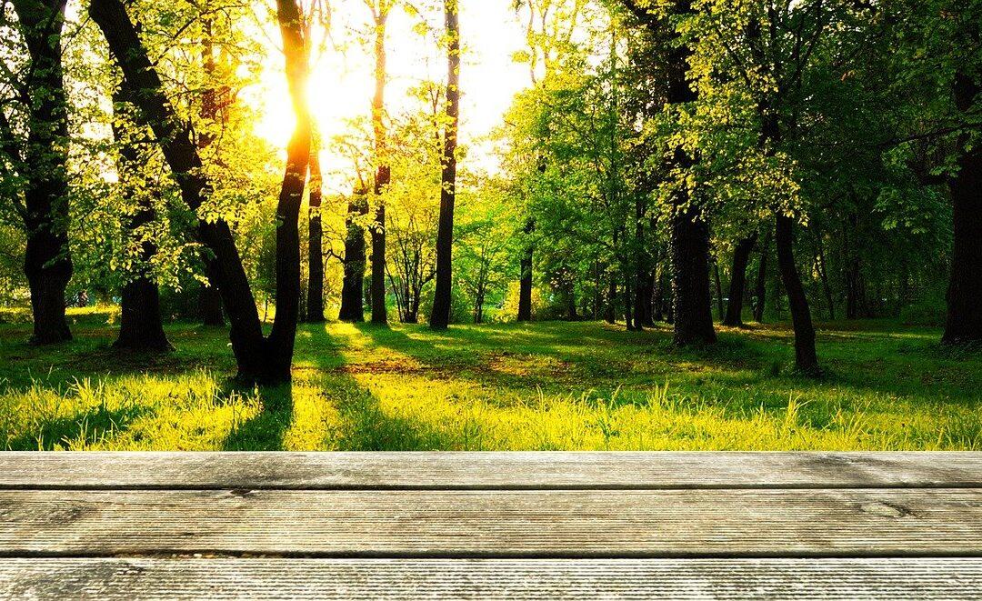 Les étapes cruciales pour la construction d'une terrasse en bois sur son jardin
